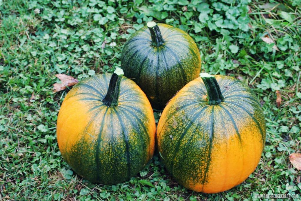 [pumpkin8%5B8%5D]