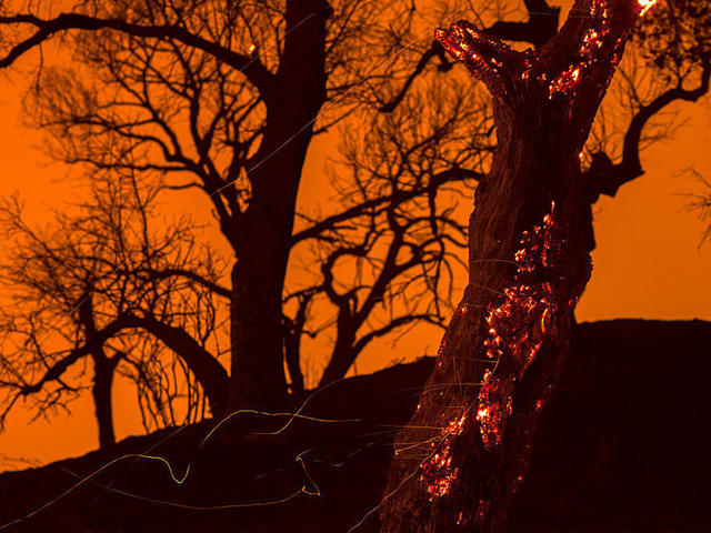 Embers fall from a burning tree in Placerita Canyon in Santa Clarita, Calif., on 24 July 2016. Triple-digit temperatures and dry conditions are fueling the wildfire. Photo: David McNew / Getty Images