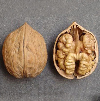 Кишиневский грецкий орех