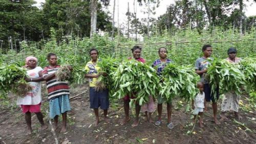 Nasib Papua Kala Gubernur Dirawat dan Wagub Tutup Usia