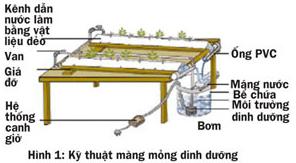 Các cách trồng rau thủy canh - 56874bbe66427