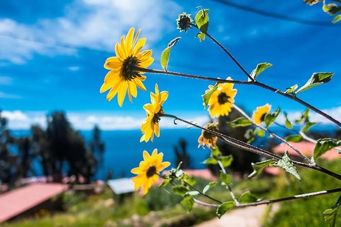 Titicaca26.jpg