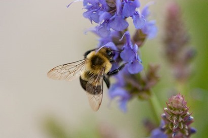 bee-flower-iowa-city.jpg.653x0_q80_crop-smart