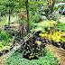 WARUNG TAMAN , Warung tanaman , Tukang Taman Jabodetabek