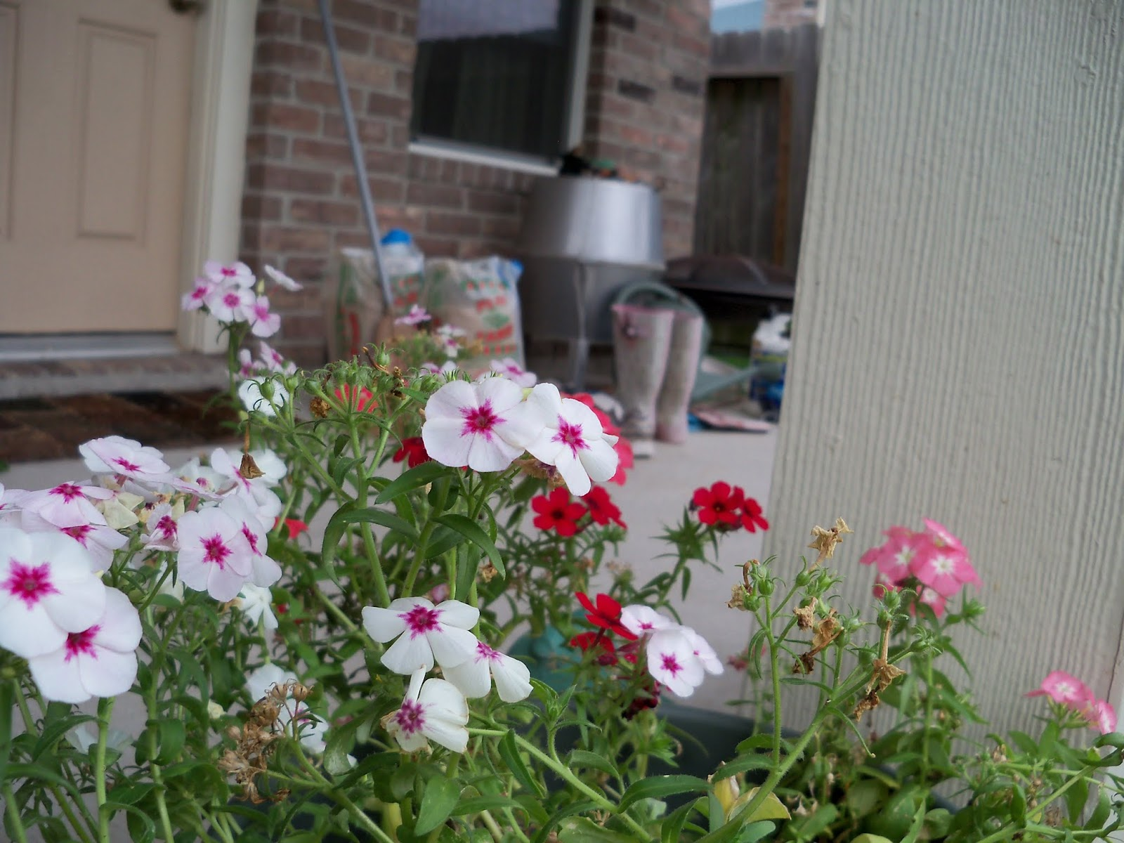 Gardening 2013 - 115_6088.JPG