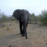 Chobe Game Reserve, this guy approaches the vehicle