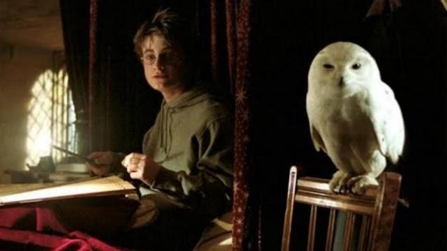 Os filmes de Harry Potter deixaram as corujas mais famosas e 5 outros fatos que você não sabia
