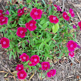 Gardening 2010 - 101_1141.JPG