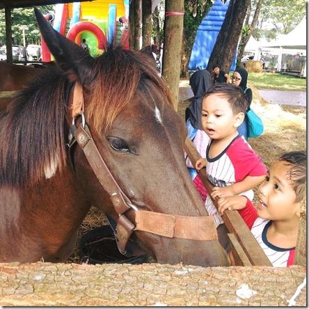 kuda-baka-maha-2016