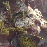 Bonaire 2011 - PICT0142.JPG