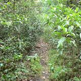 Layon près de Camp Caïman (Montagne de Kaw, Guyane), 14 novembre 2011. Photo : C. Renoton