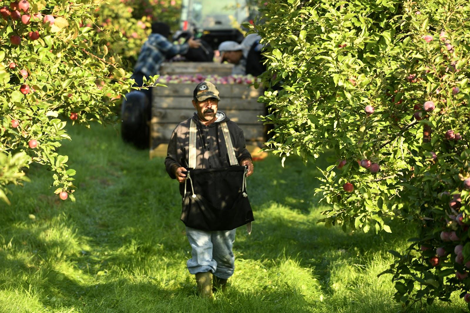 Travailleur étranger dans un verger