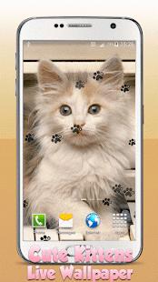 Roztomilé Koťata Živé Tapety - náhled