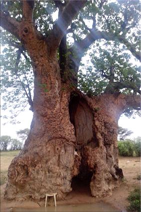 Tronco hueco de un Baobab