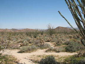 Ocotillo and Cholla were abundant in this seldom travelled area of Anza Borrego