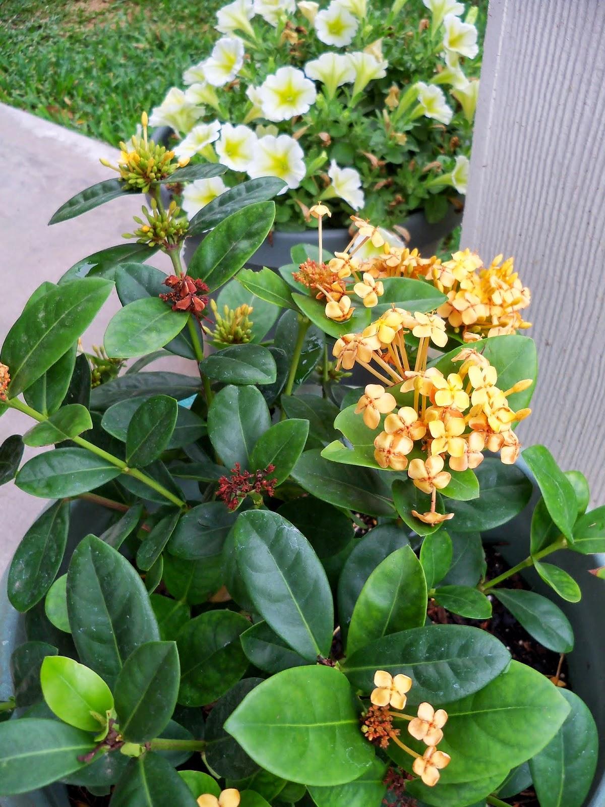 Gardening 2014 - 116_1857.JPG