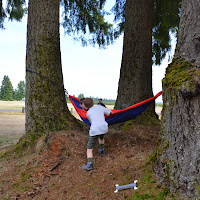 A hammock for the evening