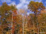 Berkshires, Massachusetts  [2004]