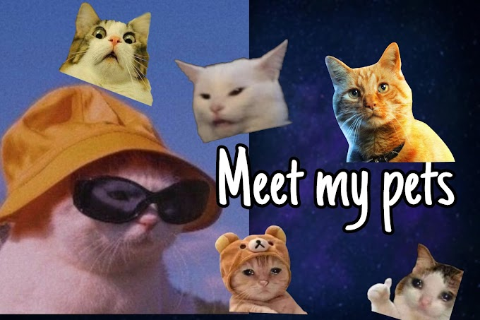 Meet My Pets