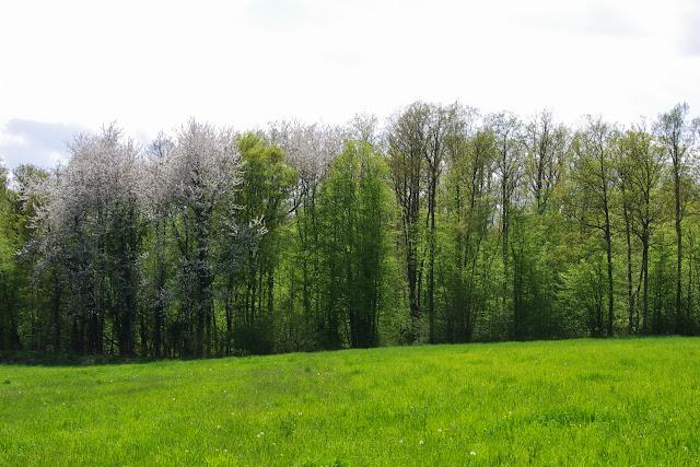 Les Hautes-Lisières (Rouvres, 28), 4 mai 2013. Photo : J.-M. Gayman