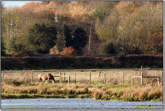 RSPB Middleton Lakes - November