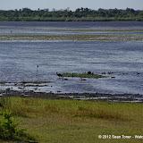 04-06-12 Myaka River State Park - IMGP4444.JPG