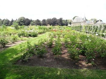 2018.06.30-006 le jardin