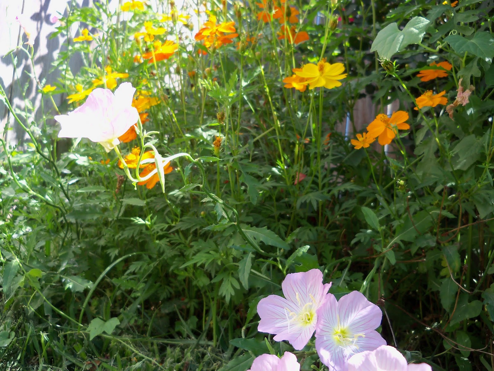 Gardening 2013 - 115_6202.JPG