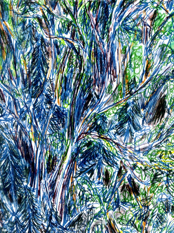 pine valley ~ frank waaldijk