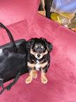 Klein Marlon neben einer handelsüblichen Handtasche.
