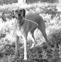 Photo: Dogiwogin Lady Lupercus