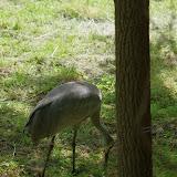 05-11-12 Wildlife Prairie State Park IL - IMGP1606.JPG