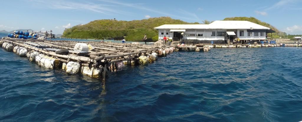 A ilha das pérolas negras