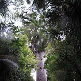 Opononi_Trouson_Kauri_Park