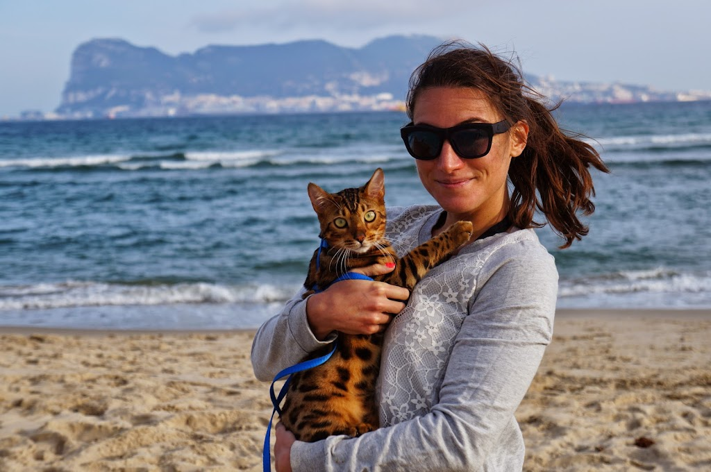 girl holding bengal cat on leash at the beach