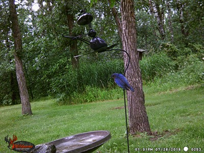 Bluebird on the pole
