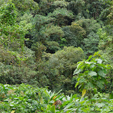 La forêt autour du Rio. Las Juntas, 1600 m (Carchi, Équateur), 4 décembre 2013. Photo : J.-M. Gayman
