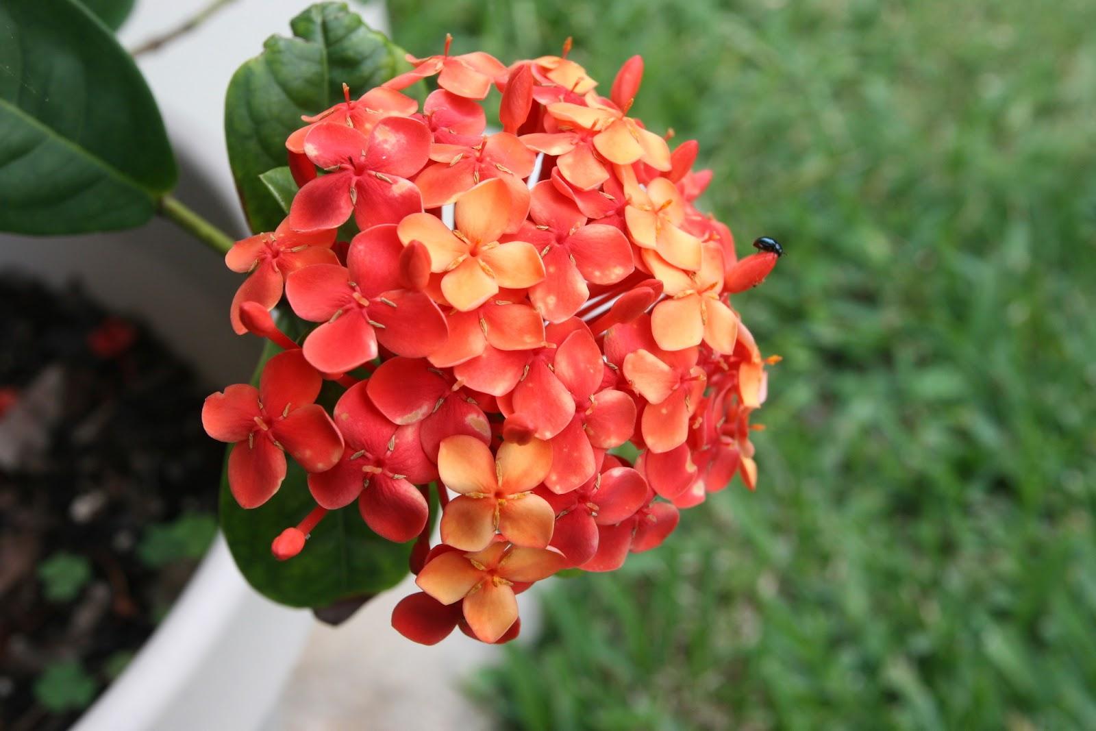 Gardening 2012 - IMG_3844.JPG