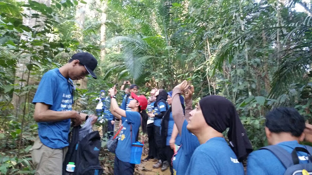 forest research institute Malaysia, save a tree, plant a tree, ikea foundation, ikea sustainability project, ikea damansara