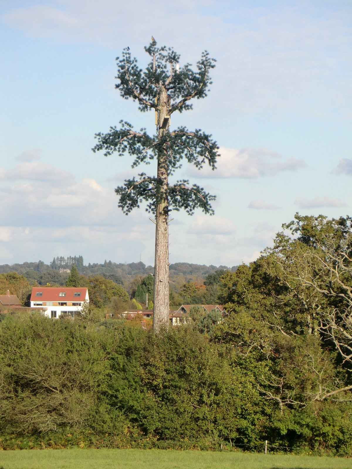 CIMG4504 Thinly-disguised phone mast, Balcombe