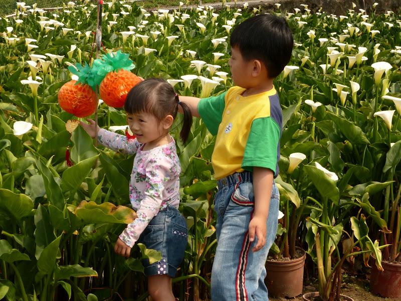 Yangminshan Shitoushan et Jinshan - P1040845.JPG