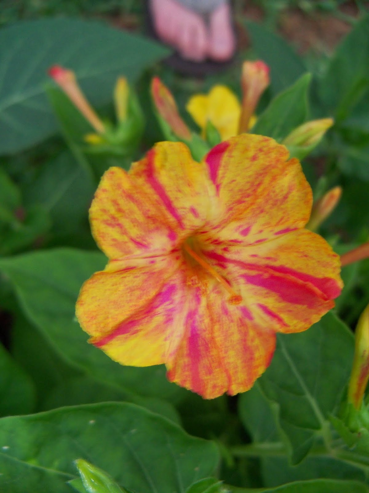Gardening 2014 - 116_1968.JPG