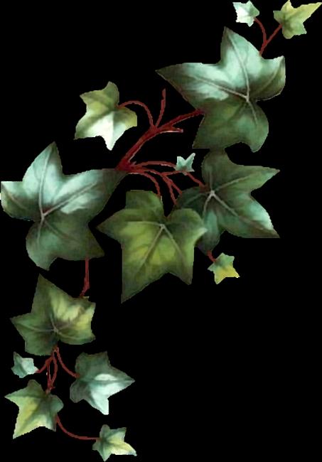 parreira