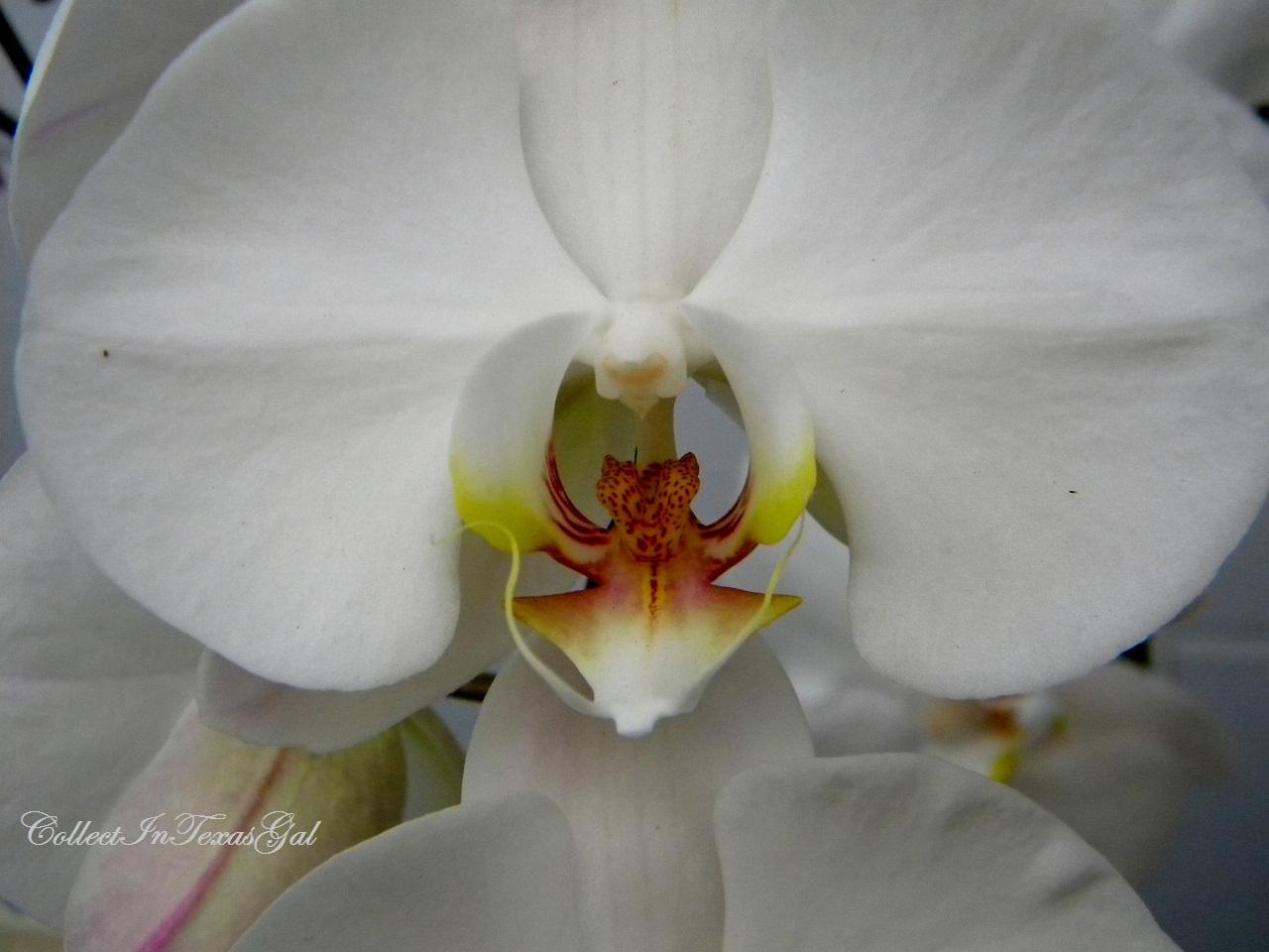 Flowers Orchid Flower Stock Photo Public Domain Pictures
