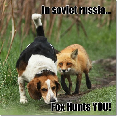 beagle-hunting_russian fox
