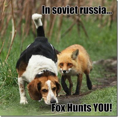beagle-hunting_russian fox