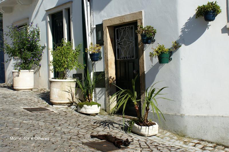 Penela, Portugal, O gato
