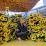Karina Kumari's profile photo