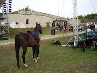 4-A kíváncsi ló.jpg