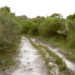 Sandy Curra Moors service trail (34523)